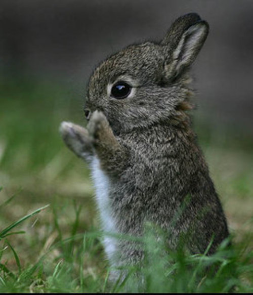 Extremely Cute Baby Bunnies