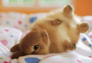 adorable-animals-babies-baby-animals-bunnies-favim-com-4529541
