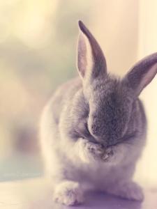 shy-bunny_by_Essa-Al-Mazrooei600_800