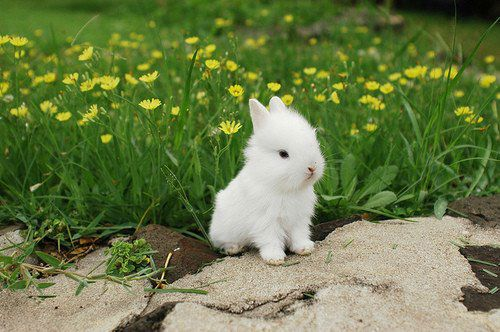 cute_bunny_in_the_grass