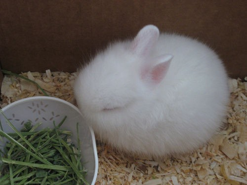 Heck, Today's a Great Day for a Fuzzy Bunny Post | My ...