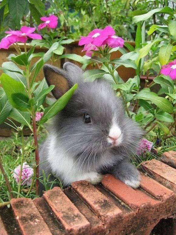 l-Cute-bunny...